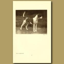 The Foxhound