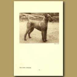 The Irish Terrier