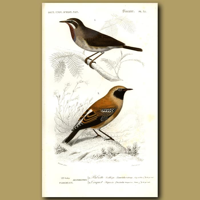 Antique print. Japanese Nogoma And Wheat-Ear Birds