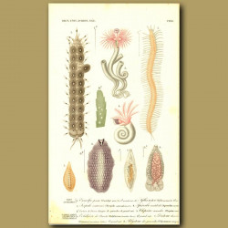 Tube Worms And Bristle Worms