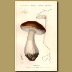 Californian Edible Mushroom