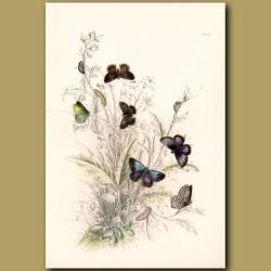 Purple Hair-streak Butterfly and Green Hair-streak Butterfly