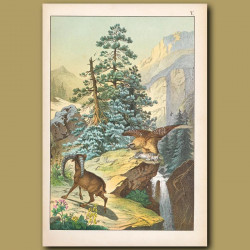 Alpine Scene, Alpine Hare, Steinbock And Bearded Vulture