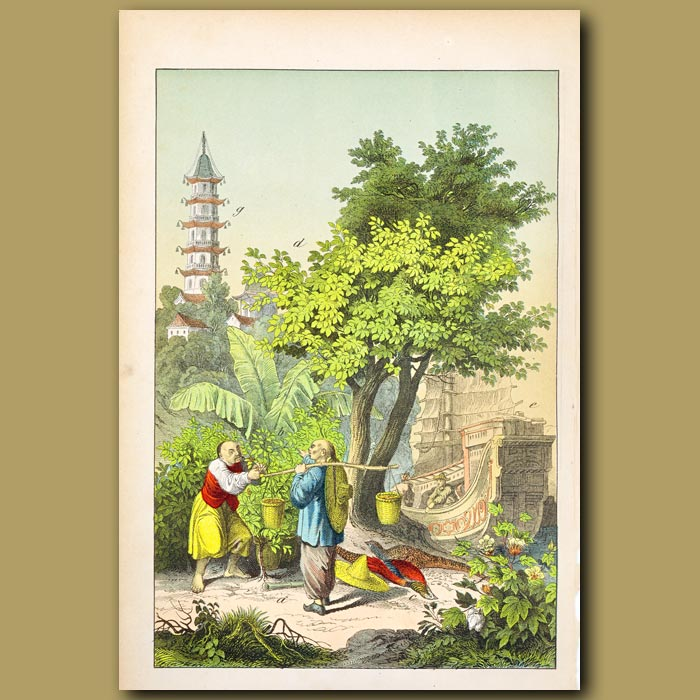 Antique print. Mulberry Tree, Pagoda, Cotton, Tea, Golden Pheasant, Chinese People