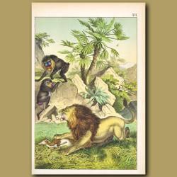 Mandrill monkey, Lion, Dwarf Palm Tree, Gazelle