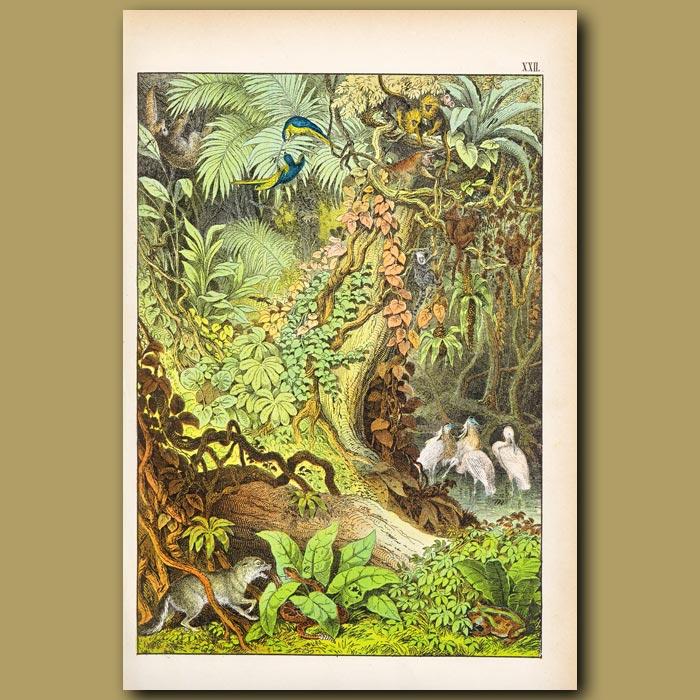 Antique print. S.American Rattlesnake, 3 Clawed Sloth, Lion Monkey, Araras
