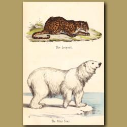 Polar Bear and Leopard