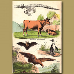 Dairy Cow, Bat, Eagle and Penguin