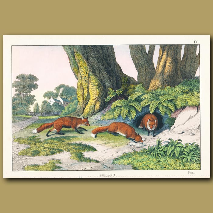 Antique print. Foxes and country house