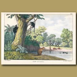 Le Brun's Tree Kangaroo