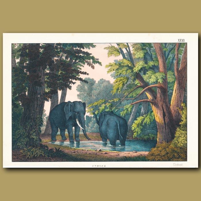 Antique print. The Elephant