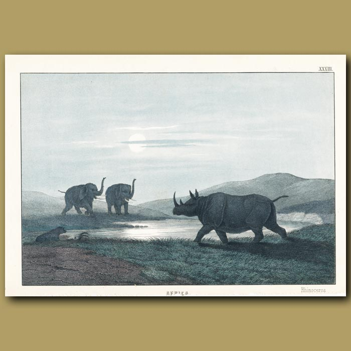 Antique print. The Rhinoceros