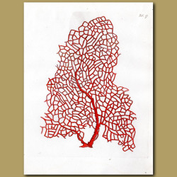 Branched Pipe Coralline