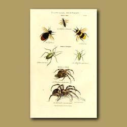 Bee, Puceron, Spider and Tarantula