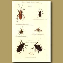 Cockroachs and Longhorn Beetles