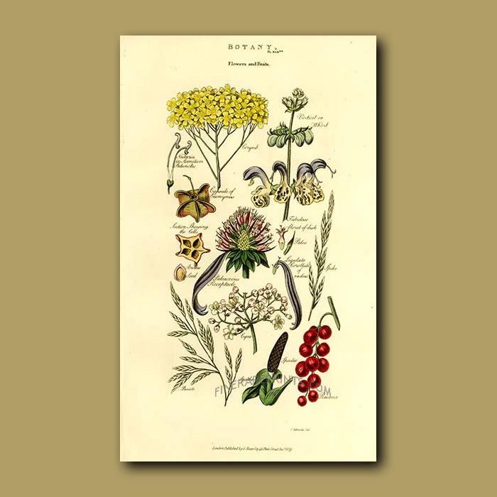 Antique print. Botany, leaves of plants