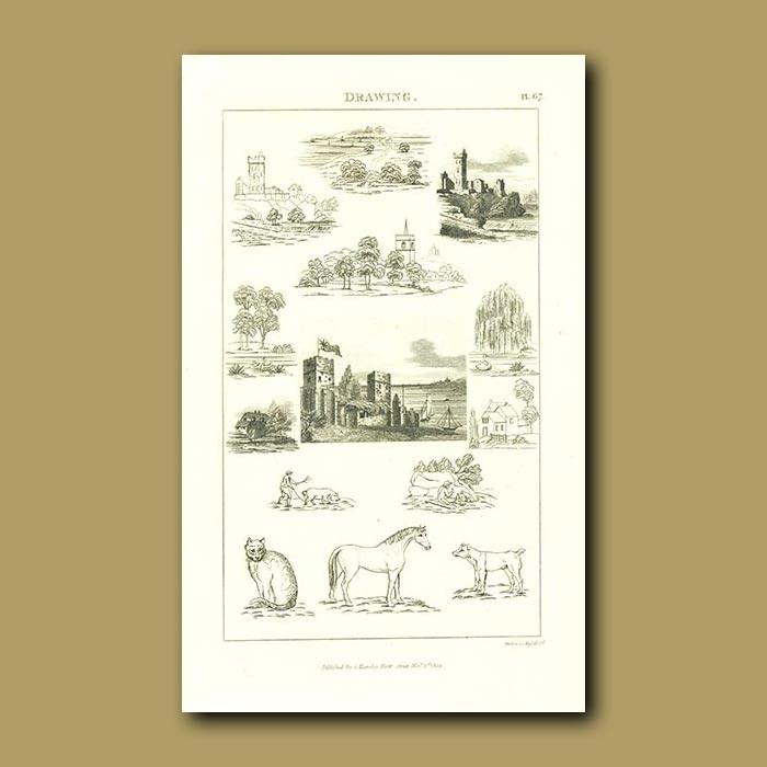 Antique print. Drawing Animals