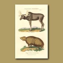 Elk and Three-banded Armadillo