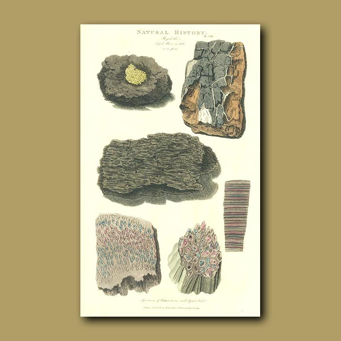 Antique print. Fossils