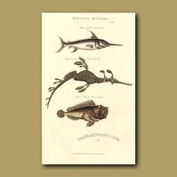 Sword Fish, Foliated Pipe-Fish and Horrid Scorpion Fish