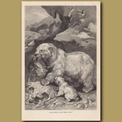 Polar Bears and their prey