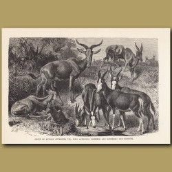 Group of African Antelopes