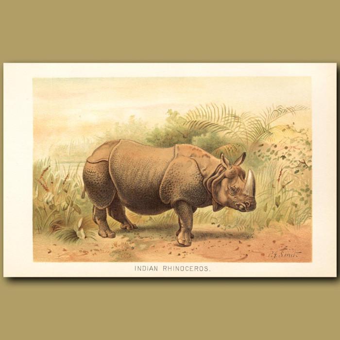 Antique print: Indian Rhinoceros