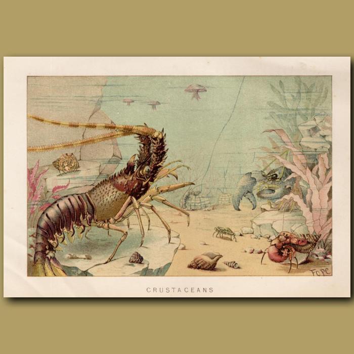 Antique print: Crustaceans