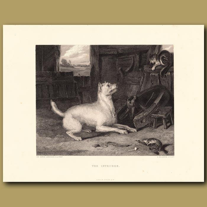 Antique print. The Intruder