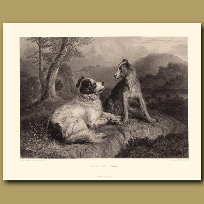 Antique print. The Twa Dogs: Collie and Newfoundland