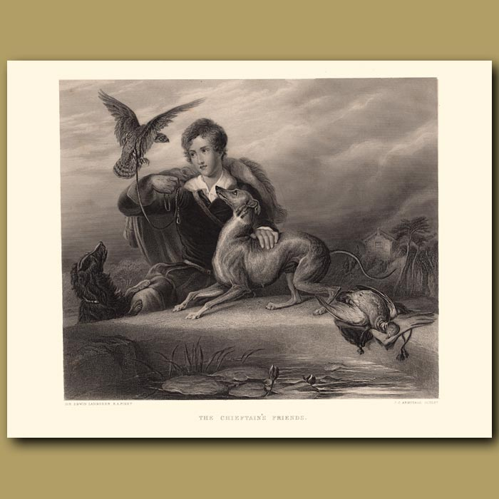 Antique print. The Chieftain's Friends: Italian Greyhound