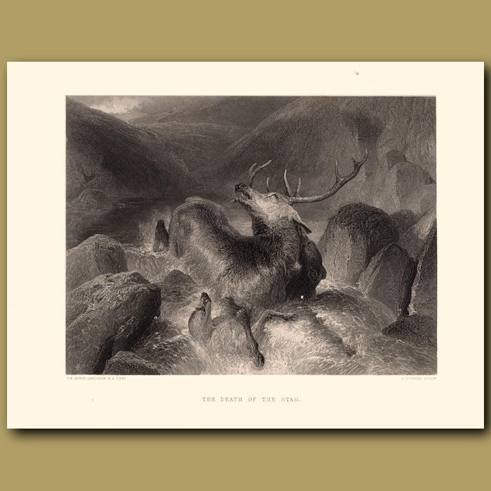 Antique print. Death of the Stag