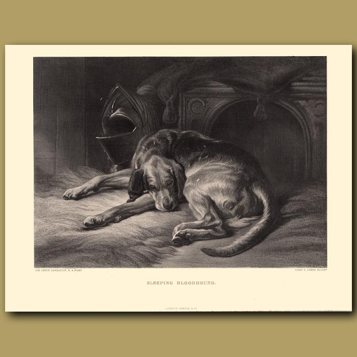 Antique print. The Sleeping Bloodhound