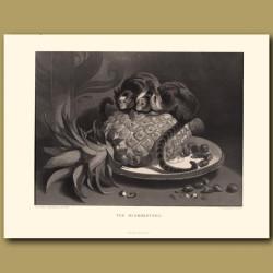 Marmozettes, or Brazilian Monkeys