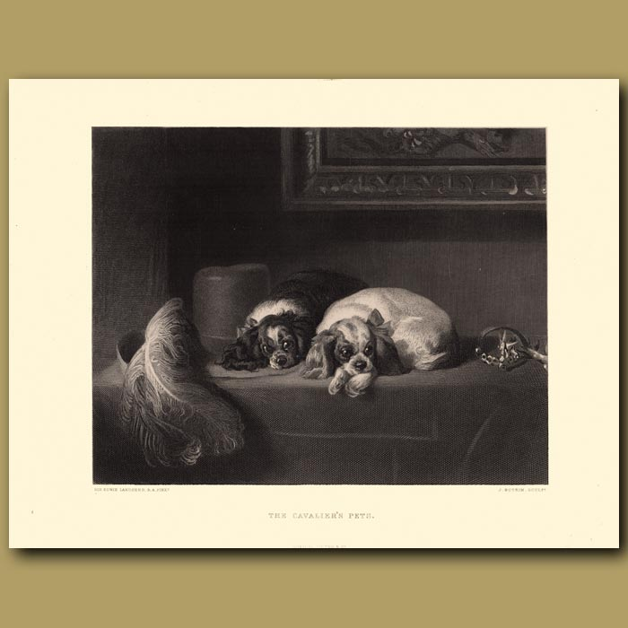 Antique print. The Cavalier's Pets: King Charles Spaniels