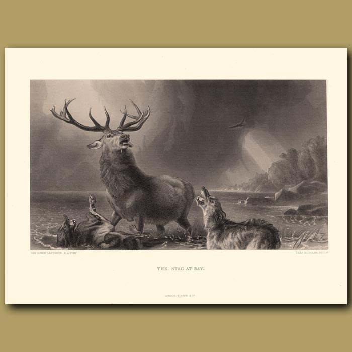 Antique print. The Stag at Bay