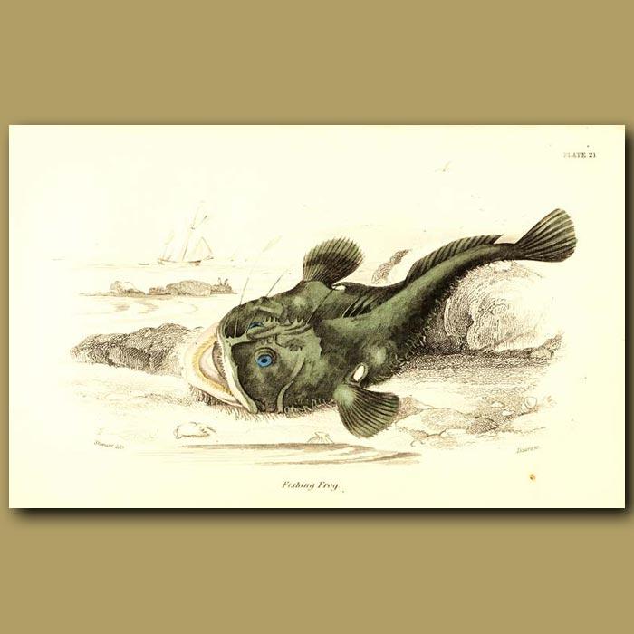 Antique print. Fishing Frog (Frogfish or Anglerfish)