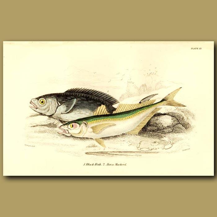 Antique print. Black Fish and Horse Mackerel