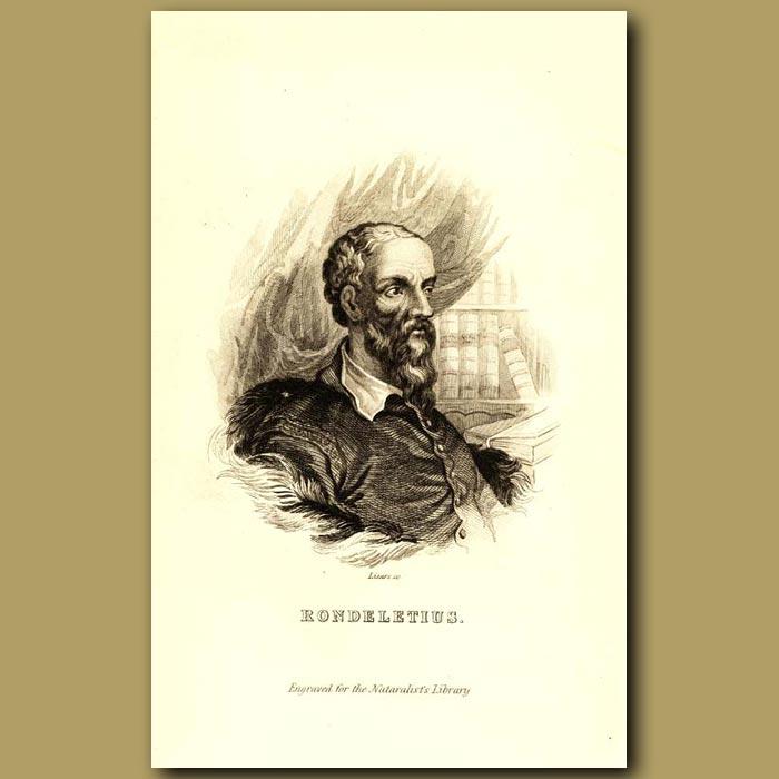 Antique print. Rondeletius