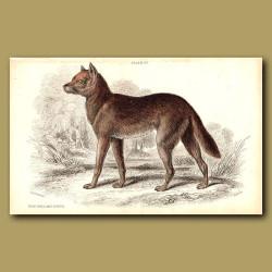 New Holland Dingo
