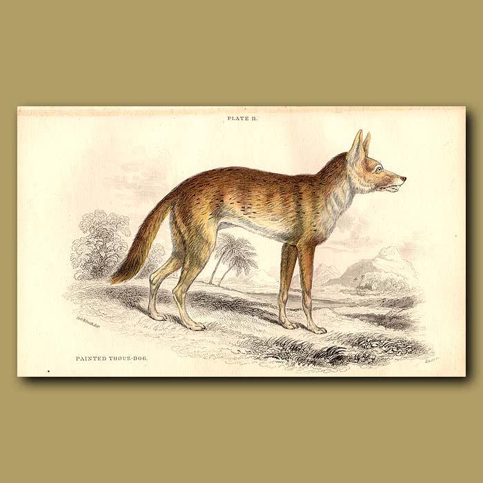 Antique print. Painted Thous-dog