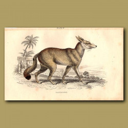 Pale Fox-dog