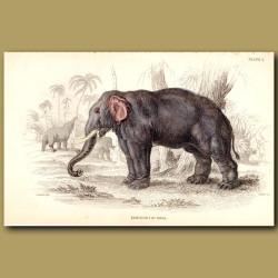 The Elephant Of India