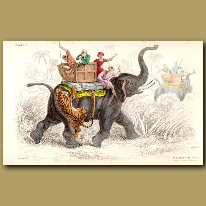 Antique print. The Elephant Of India, Tiger Hunting