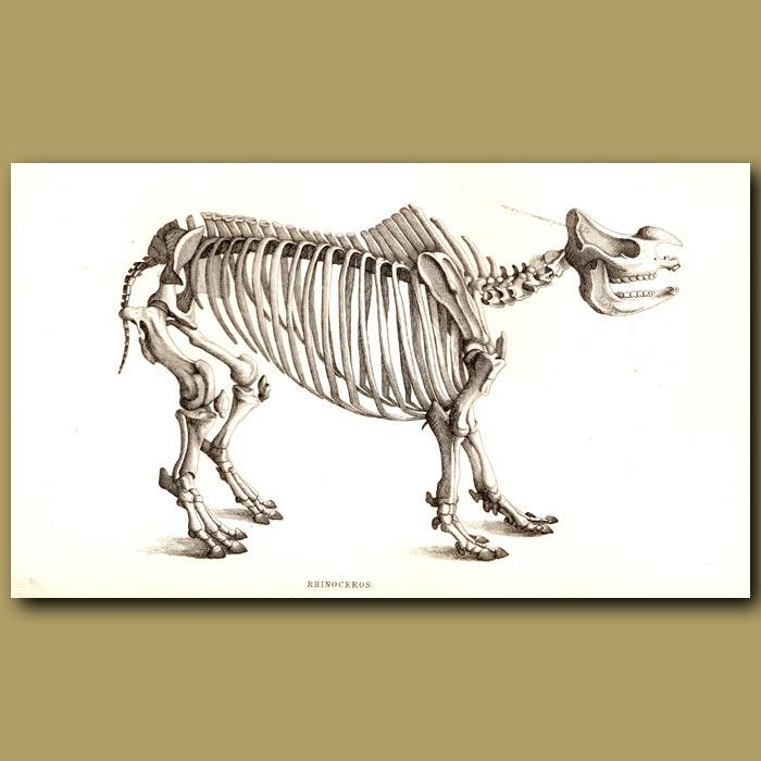 Antique print. Rhinoceros Skeleton