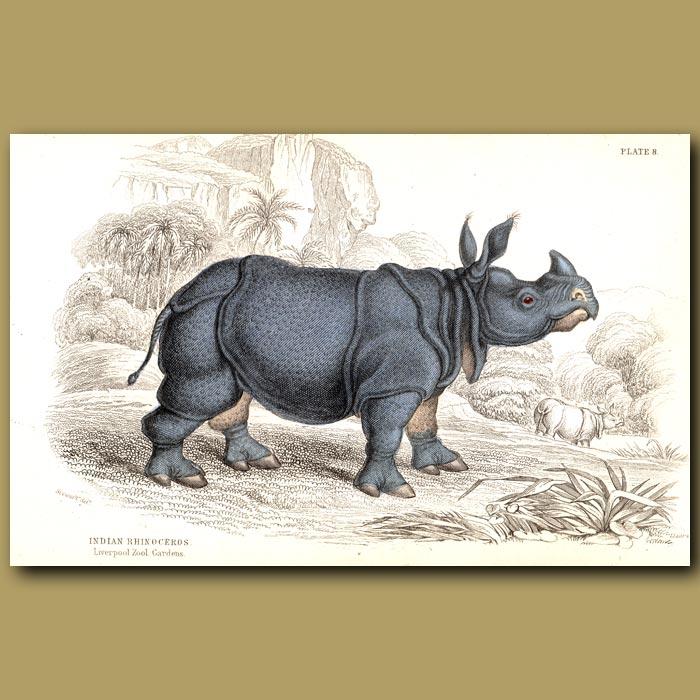 Antique print. Indian Rhinoceros