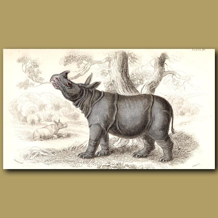 Antique print. Sumatran Rhinoceros