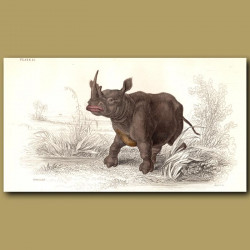 Flat-Nosed Rhinoceros