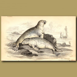 Common Seal of the French Coasts