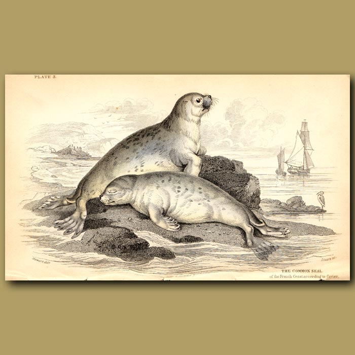 Antique print. Common Seal of the French Coasts
